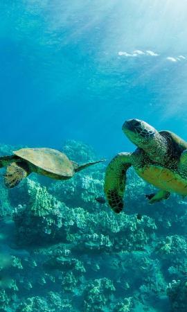 Vandenberg Wreck : Sea Turtle