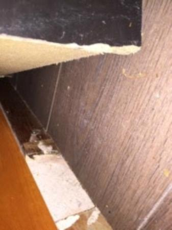 Hotel Ajax: Bitemarks From Mice And Rats In Furniture