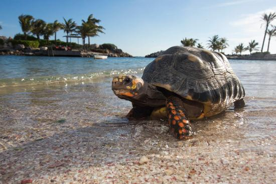 Baoase Luxury Resort: Beach Turtle