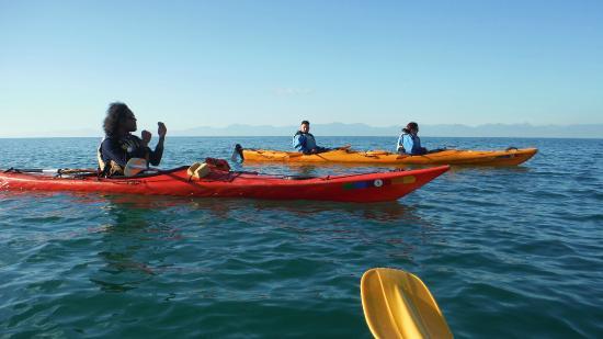 Kaiteriteri Kayaks : Our Guide and kayak companions