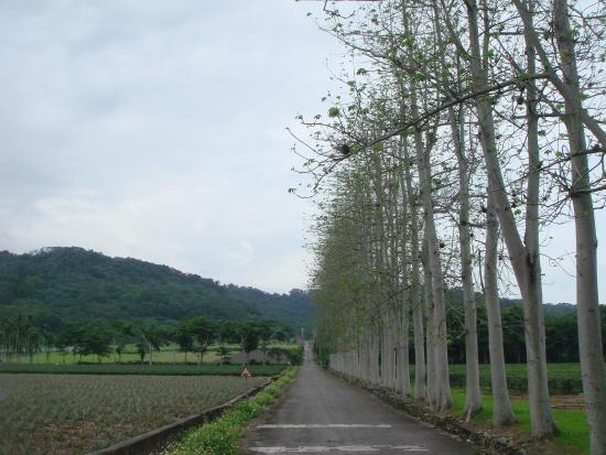 Luye Longtian Bikeway District