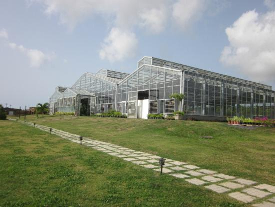 Sandy Point Town, St. Kitts: Green houses