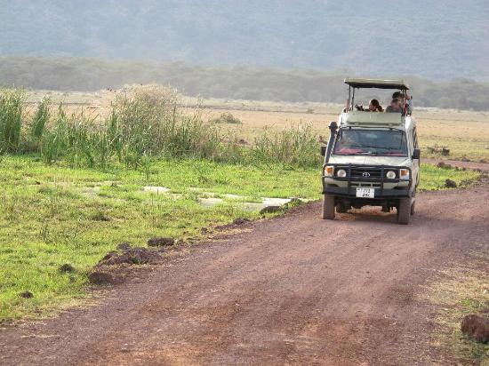 African Servalcat Safaris - Day Tours