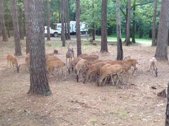Oakland, MS: Right outside our window at the jones creek campground!