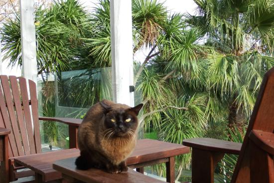 The Loft Art Studio & Premium Bed and Breakfast: Spencer our Burmese on our