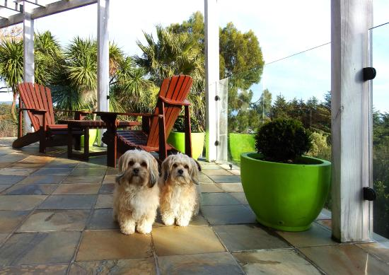 The Loft Art Studio & Premium Bed and Breakfast: Our 3-year old Lhasa Apso girls Sarah and Jessica
