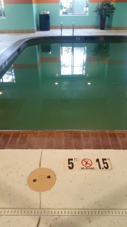 Holiday Inn Express Hotel & Suites: swamp pool