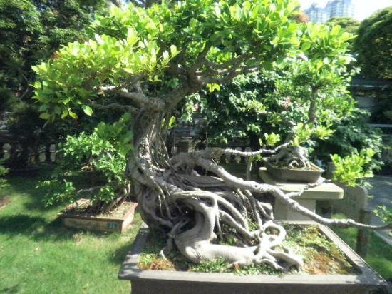 Zhongshan Park: 盆栽