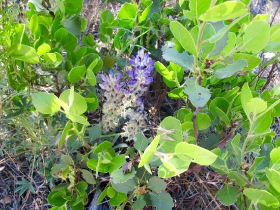 Living Memorial Sculpture Garden : Wild flowers and brush landscape