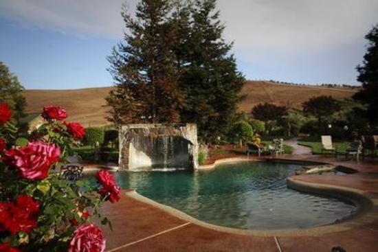 The Purple Orchid Wine Country & Spa: Pool