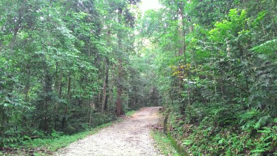 FRIM -Forest Research Institute of Malaysia: Entrance to trekking track