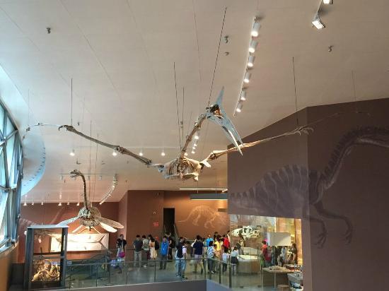 Shanghai Natural History Museum Address
