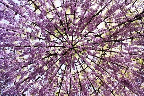 Kitakyushu, Japón: ドームは下から見上げるとまるで万華鏡
