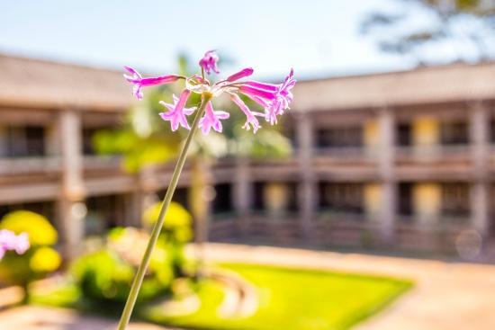 Mukuba Hotel: Flower
