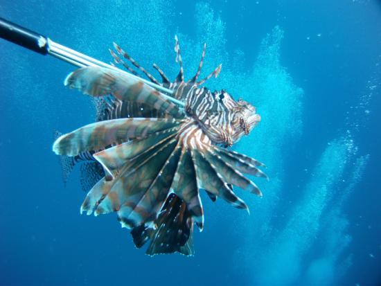Roatan Lionfish Company