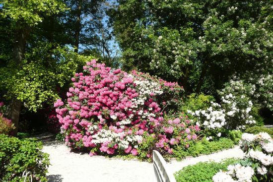 Arboretum Trompenburg: Rhodondendron