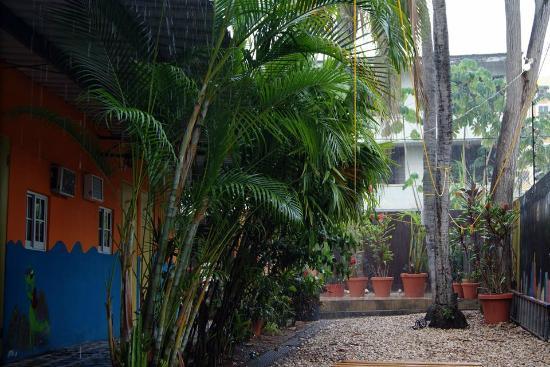 Hostal Mamallena : Garden during rainstorm
