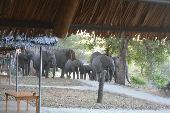 Tarangire Safari Lodge: OMG - elephants walking around our tents!
