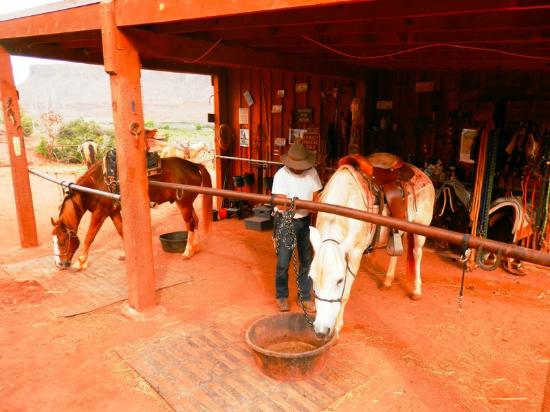 Wrangler steven picture of moab horses moab tripadvisor for Db ranch