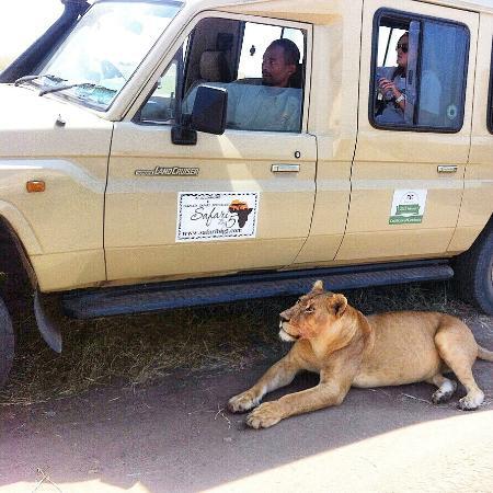 Safari Big 5 Day Tours
