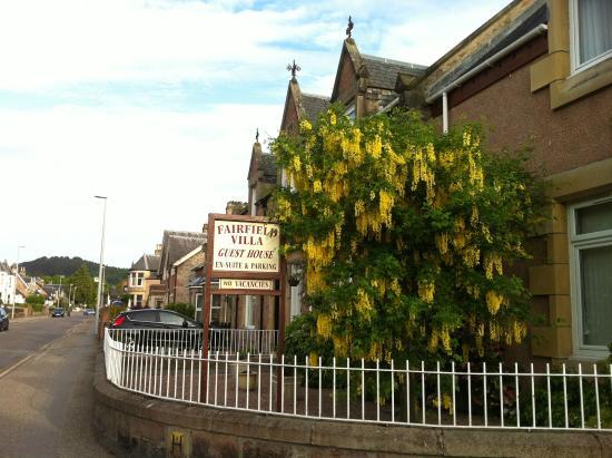 Fairfield Villa Guest House: White Acacia tree