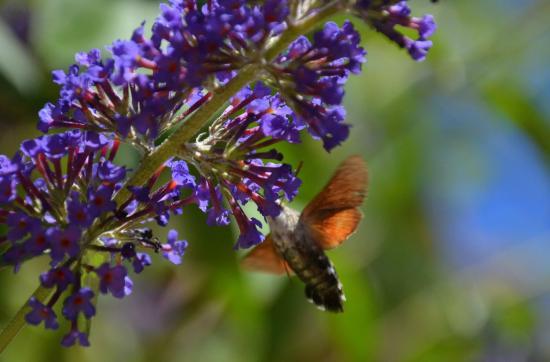 St. Eutrope de Born, Frankrijk: moth