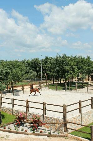 Sveti Lovrec, Croácia: Konjicki klub Jakici Horse Riding