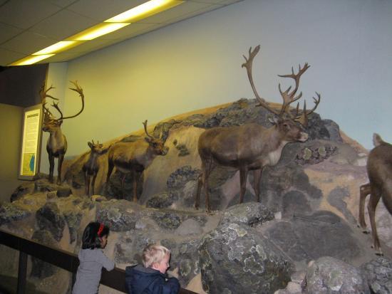 Man In Nature Museum Winnipeg