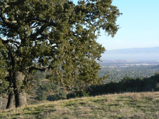 Almaden Quicksilver County Park: View from trail
