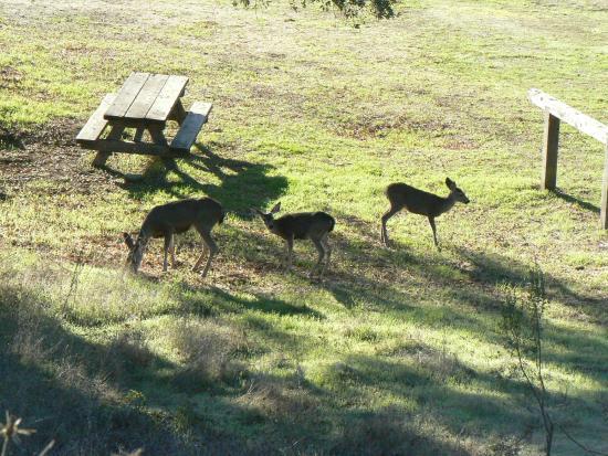 Almaden Quicksilver County Park: You might encounter some local wild life