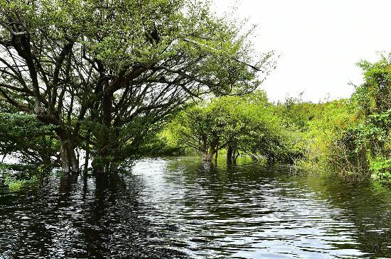 Amazon Jungle Palace: igapó