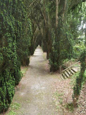 Tregrehan Garden : The Yew Walk