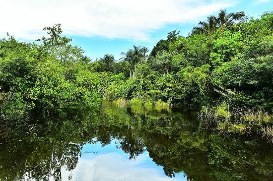 Amazon Jungle Palace: selva