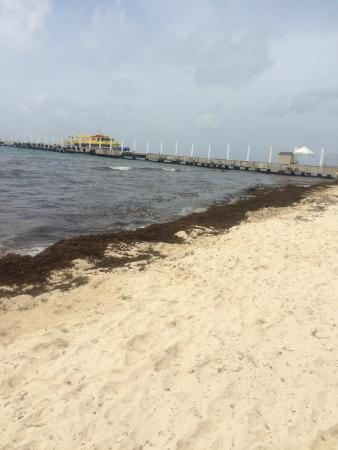 seaweed on the beach - Picture of Hilton Playa del Carmen, an All