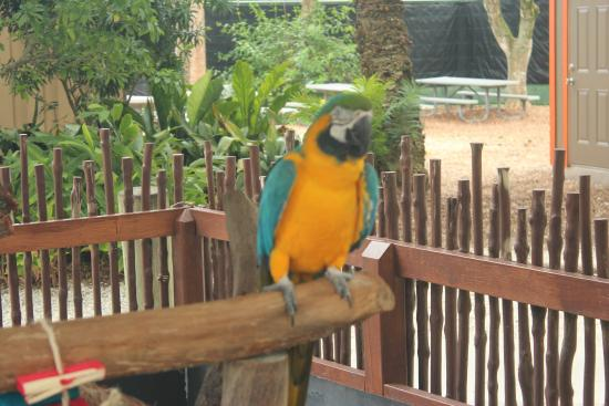 The Parrots Greeted Us As We Entered The Park Picture Of Naples Zoo At Caribbean Gardens