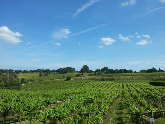 Three Choirs Vineyards: What a day, what a view!