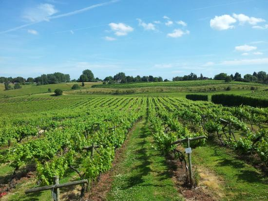 Three Choirs Vineyards: A perfect summer's day!