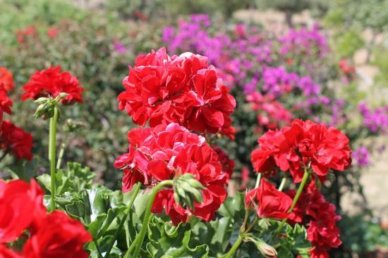 fiori sul terrazzo - Picture of B&B La Terrazza, Cetraro - TripAdvisor