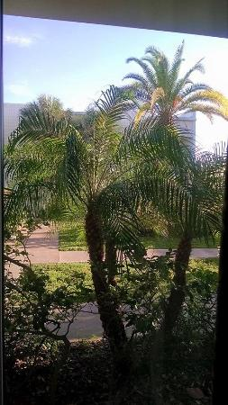 La Quinta Inn Clearwater Central: View from our room.