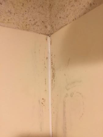 Days Inn & Suites Denver International Airport: Mold in the corner #2