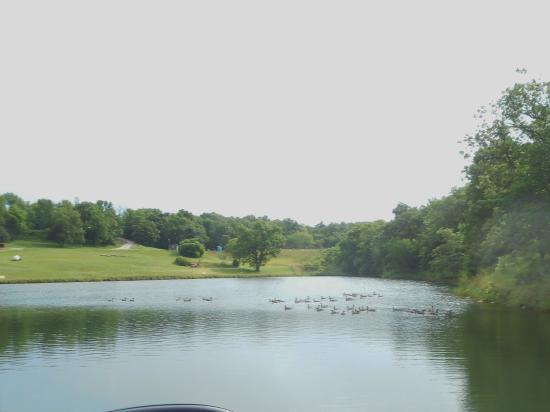 Lake Paradise Camping Resort: Geese enjoying the lake.