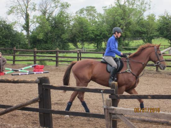 Cotswolds Riding: Red, 6yr old Irish Sport Horse/Irish Thoroughbred