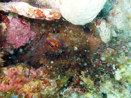 Nissaki, Greece: octopus