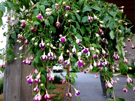 Boulder Creek Inn : One of the hanging baskets