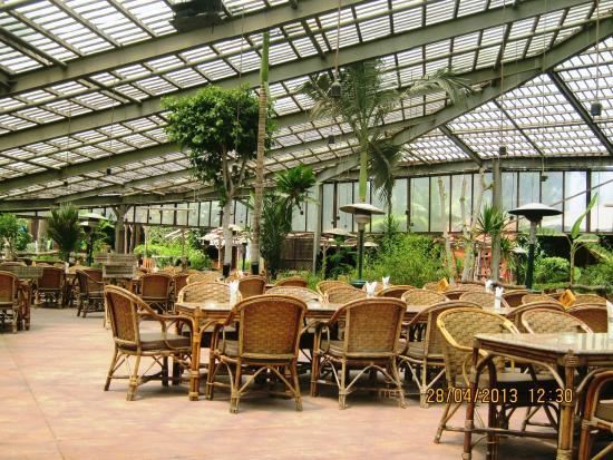 Jungle : garden