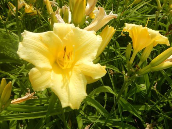 Ogrod Botaniczny w Lodzi : flor
