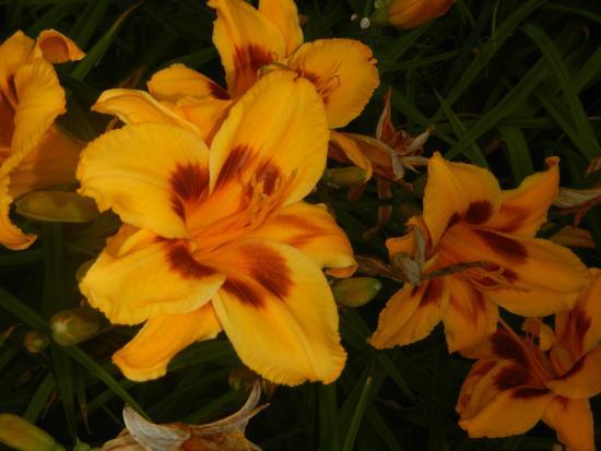 Ogrod Botaniczny w Lodzi : flor diablo