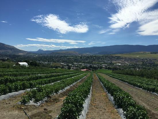 Davison Orchards Country Village: Beautiful view from the tour.