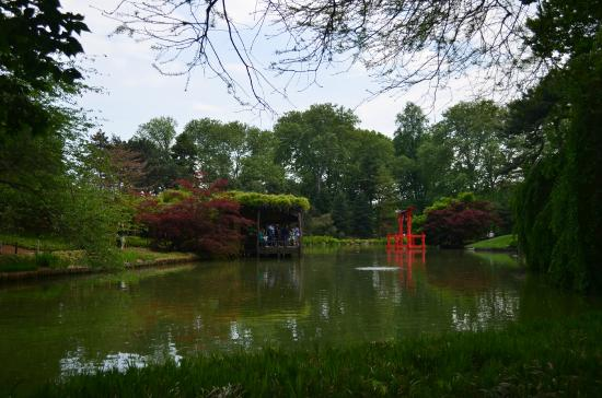 Cerezos Picture Of Brooklyn Botanic Garden Brooklyn Tripadvisor