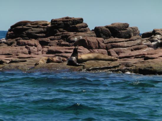 Arriba de la Roca: Sea Lions at Wildlife Preserve in La Paz